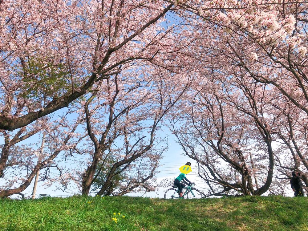 さくら堤公園_サイクリング
