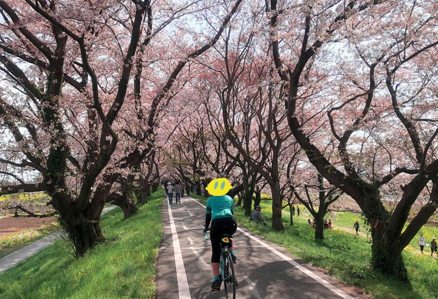 さくら堤公園_桜のトンネル