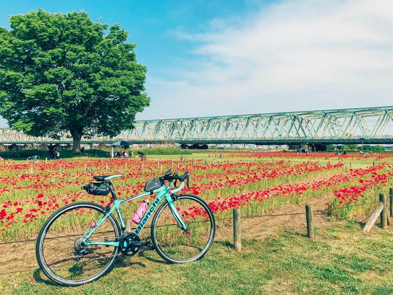 荒川沿い、平井運動公園のポピーのお花畑の可愛い景色