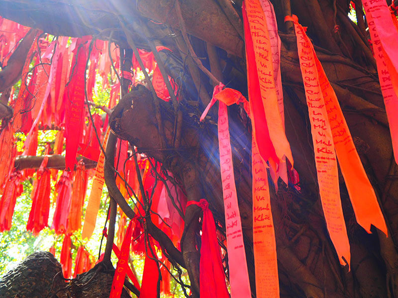 スイティエン公園の樹に結ばれた赤いリボン