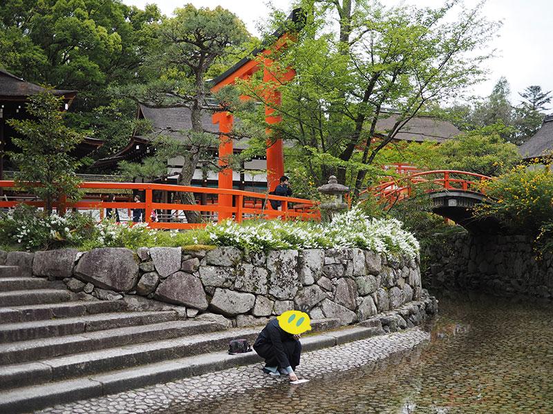 下鴨神社の水みくじを御手洗池の水に浸す