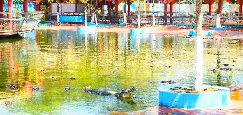 スイティエン公園のワニ園、大量のワニ